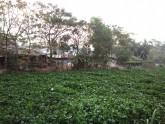 দক্ষিণের সুখ-অসুখ: এখানে নদী মরে লোভ আর নির্যাতনে