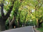 যশোর রোডের গাছ কাটার সিদ্ধান্তে কলকাতা হাইকোর্টের অনুমোদন