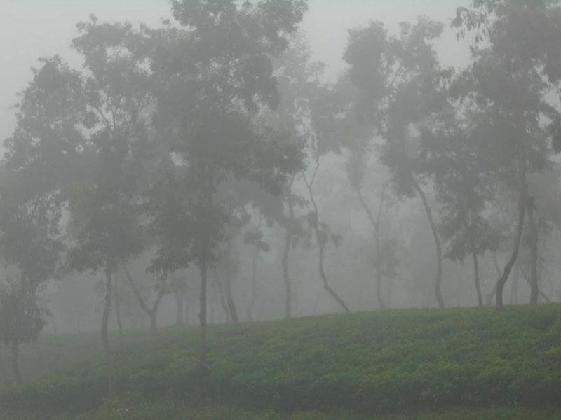 শ্রীমঙ্গলে দেশের সর্বনিম্ন তাপমাত্রা ১৩ দশমিক ৬ ডিগ্রি সেলসিয়াস