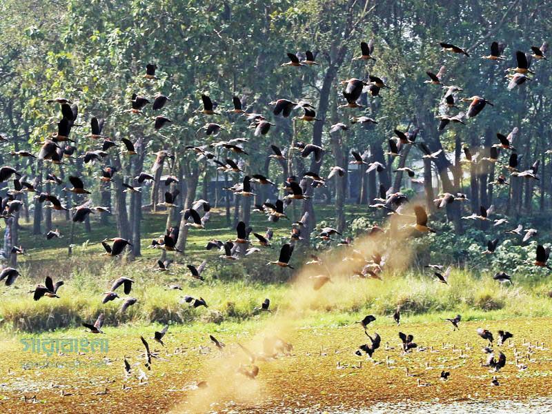 অতিথি পাখির কলতানে মুখর জাবি ক্যাম্পাস