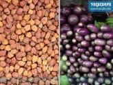 দাম কমছে ছোলা-বেগুনের, অপরিবর্তিত পেঁয়াজ-রসুন-আদা