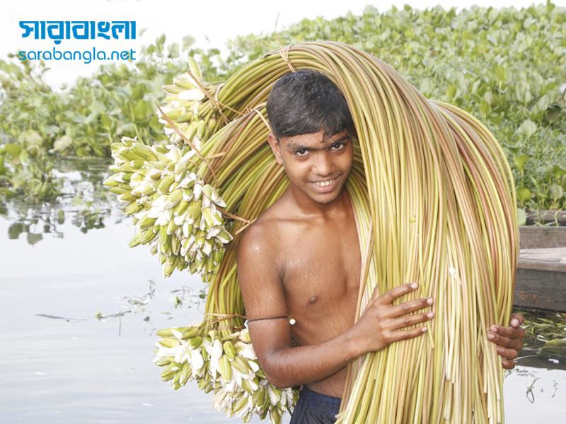 দাড়িয়াপাড়া বিলে শাপলার হাসি