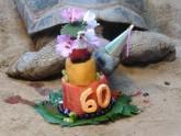 কচ্ছপের জন্মদিনে…
