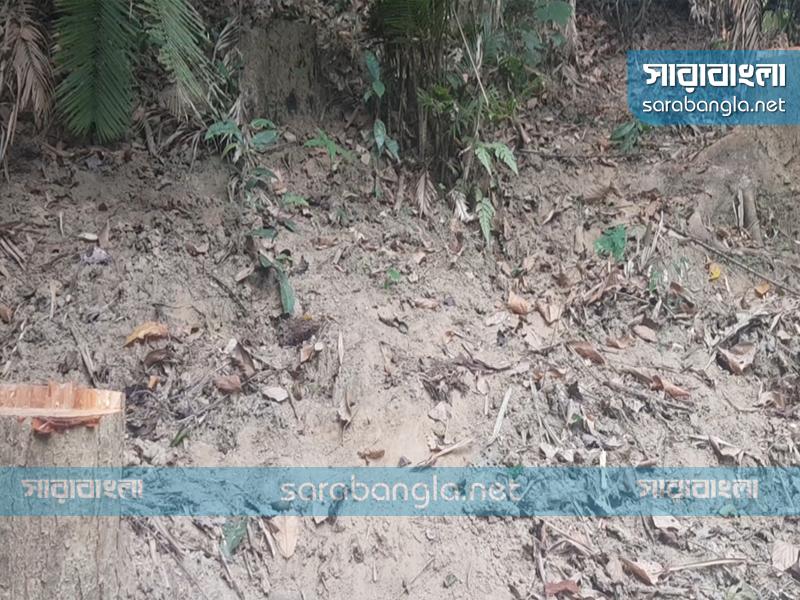 রাজকান্দি চিরহরিৎ বন: কর্মকর্তাদের সামনেই চুরি হচ্ছে গাছ