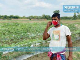 করোনাকালে ডিজিটাল উদ্যোগে ভরসা পাচ্ছেন চুয়াডাঙ্গার কৃষকরা