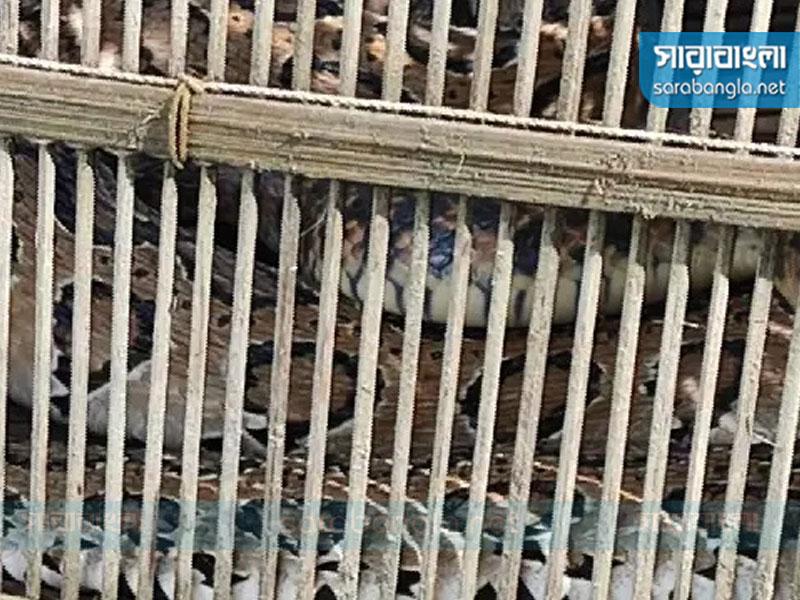 মুন্সীগঞ্জে মাছ ধরার চাঁইয়ে বিরল প্রজাতির 'চন্দ্রবোড়া' সাপ