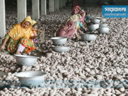 হিমাগারে দাম কমলেও ঊর্দ্ধমুখী আলুর বাজার
