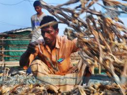কর্ণফুলী তীরে শুটকি তৈরির ধুম