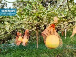 অনুপ্রেরণা ইউটিউব, আমের রাজধানীতে হলুদ তরমুজে বাজিমাত