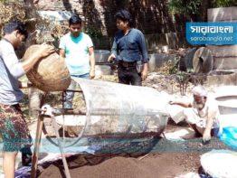 বাণিজ্যিক উৎপাদনে 'কেঁচো সার', বিষমুক্ত ফসলের প্রতিশ্রুতি
