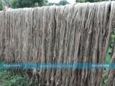 সোনালী আঁশ, পাট, চুয়াডাঙ্গা, কৃষি সম্প্রসারণ অধিদফতর