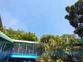 ফিরোজা-নীল