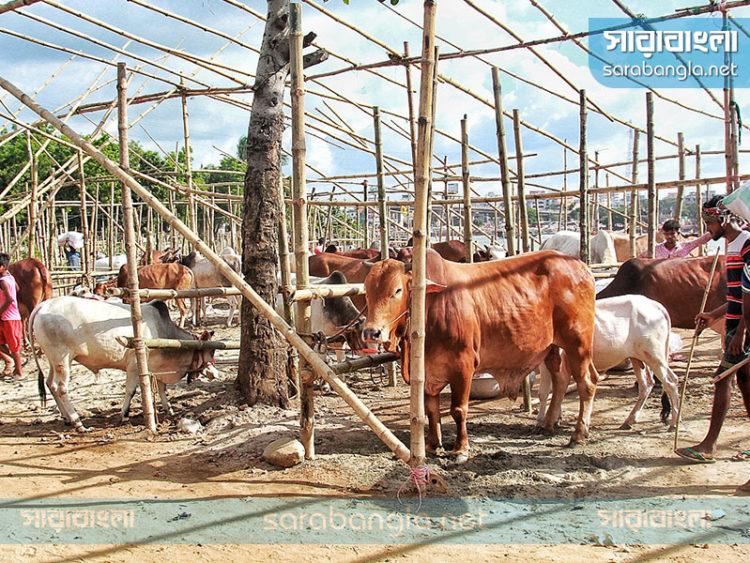 রাজধানীতে বসবে ১০ অস্থায়ী পশুর হাট, ইজারা চূড়ান্ত