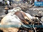আড়তদারদের 'সিন্ডিকেটে' বিপাকে মৌসুমি চামড়া ব্যবসায়ীরা