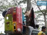 ফেনীতে পিকনিকের বাস দুর্ঘটনায় ৭ জনের মৃত্যু