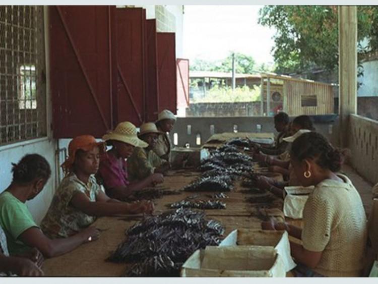 ভ্যানিলা চুরির দায়ে জেলখানায় মাদাগাস্কারের শিশুরা