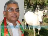 'ভারতীয় গরুর দুধে সোনা আছে; বিদেশি গরু মা নয়, আন্টি'