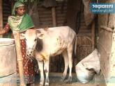 লাম্পি স্কিন রোগের প্রাদুর্ভাবরোধে জরুরি ব্যবস্থা নেওয়ার নির্দেশ
