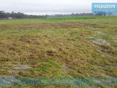 'বুলবুলে' ক্ষতিগ্রস্ত উপকূলীয় এলাকার ১৫ ভাগ ফসলি জমি
