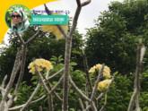 দ্য লাস্ট প্যারাডাইজ অন আর্থ।। ১১তম পর্ব: মাংকি ফরেস্ট