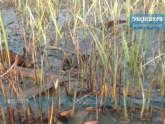 ঘন কুয়াশা ও শৈতপ্রবাহে মরছে বীজতলা, দুশ্চিন্তায় হিলির কৃষক