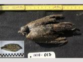 সাইবেরিয়ায় মিলল ৪৬ হাজার বছর আগের পাখির ফসিল