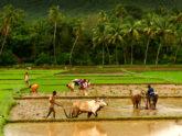 ভারতে লকডাউন শিথিল, কৃষিকাজ চলবে