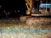 রাঙ্গামাটিতে কীটনাশক দিয়ে পাকানো ৩০ হাজার আনারস ধ্বংস