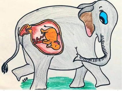 কেরালায় অমানবিকতা: পটকাভর্তি আনারস খাইয়ে অন্তঃসত্তা হাতি হত্যা