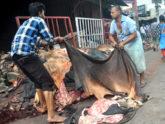 কাঁচা চামড়ার বাজার: মৌসুমি ব্যবসায়ী আউট, নিয়ন্ত্রণে আড়তদাররা