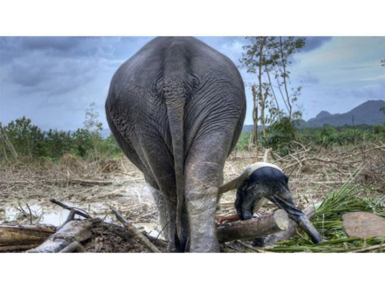 ৫০ বছরে দুই-তৃতীয়াংশ বন্যপ্রাণী বিলুপ্ত: গবেষণা