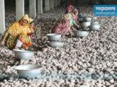 হিমাগারে দাম কমলেও ঊর্ধ্বমুখী আলুর বাজার