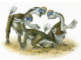 এবার পাওয়া গেলো টিয়া পাখির মতো দেখতে ডাইনোসর