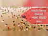 সিলেটের বিশ্বনাথে ঐতিহ্যবাহী পলো বাওয়া উৎসব (ভিডিও)