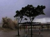 সুন্দরবনে জলোচ্ছ্বাস, প্রাণ রক্ষায় বন্যপ্রাণীদের ছোটাছুটি