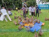 রাঙ্গামাটিতে ক্ষুধার্ত বানরদের খাবার দিলো জেলা প্রশাসন