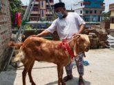 ৯০ কেজি ওজনের রাজাবাবু চাঁপাইনবাবগঞ্জের সেরা