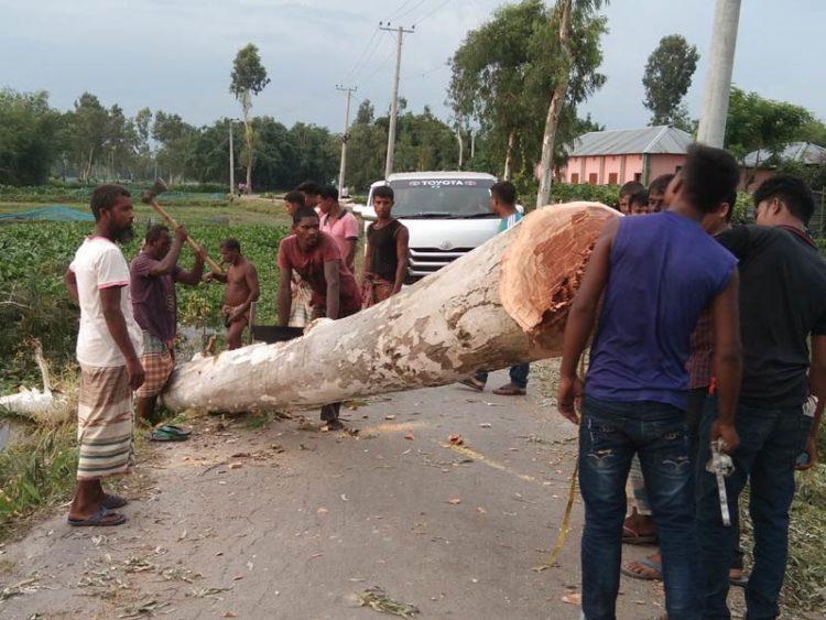 লালমনিরহাটে সড়কের গাছ কেটে ক্লাব ও মাদরাসায় দান